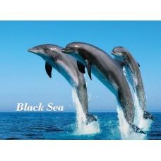 Магниты с видами Одессы. Дельфины